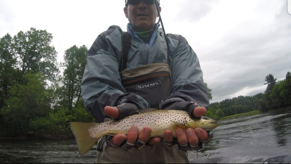 Brown Trout, Fly Fishing, River Drift Fly Fishing, Vermont New York Fly Fishing Guides