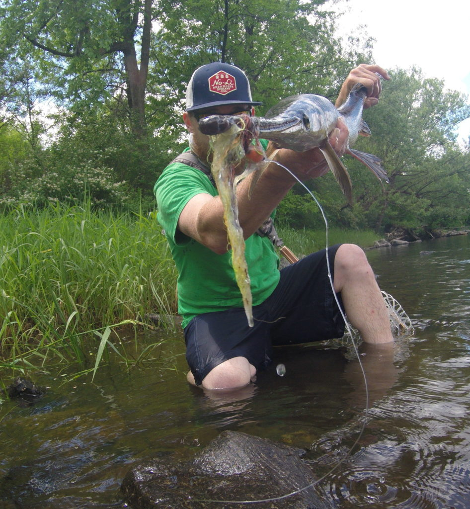 fish, fishing, gar, longnose gar, guided trips, vermont, new york