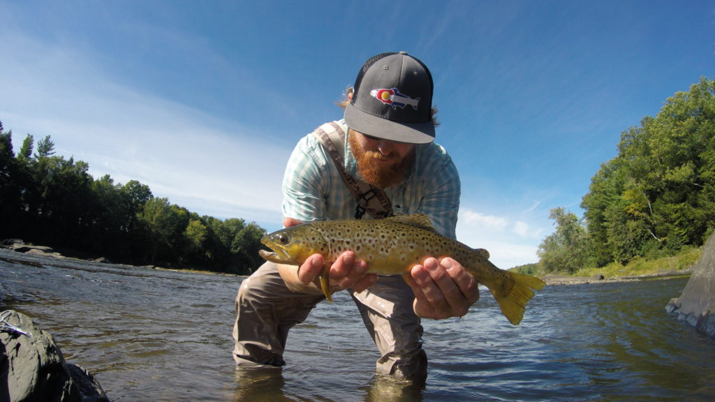 fish, fishing, trout, brown trout, fly fishing, river