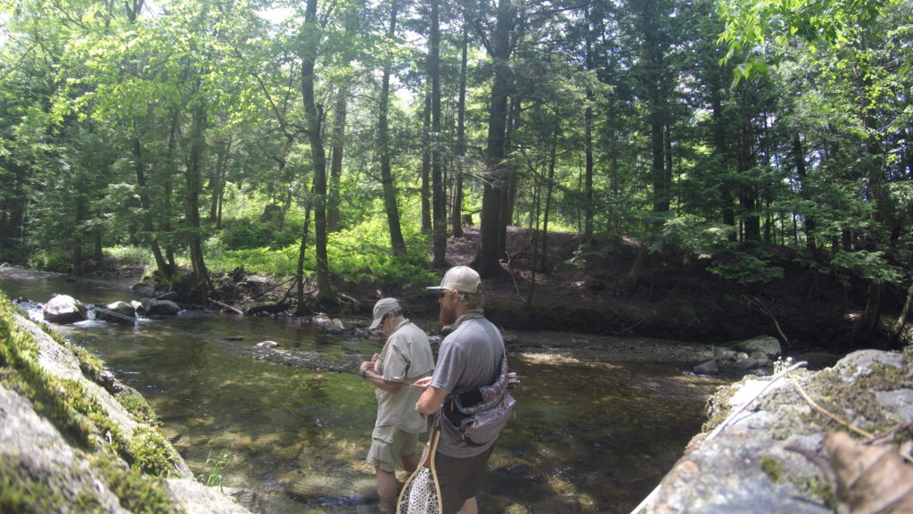 fish, trout, fishing, fly fishing, brook trout