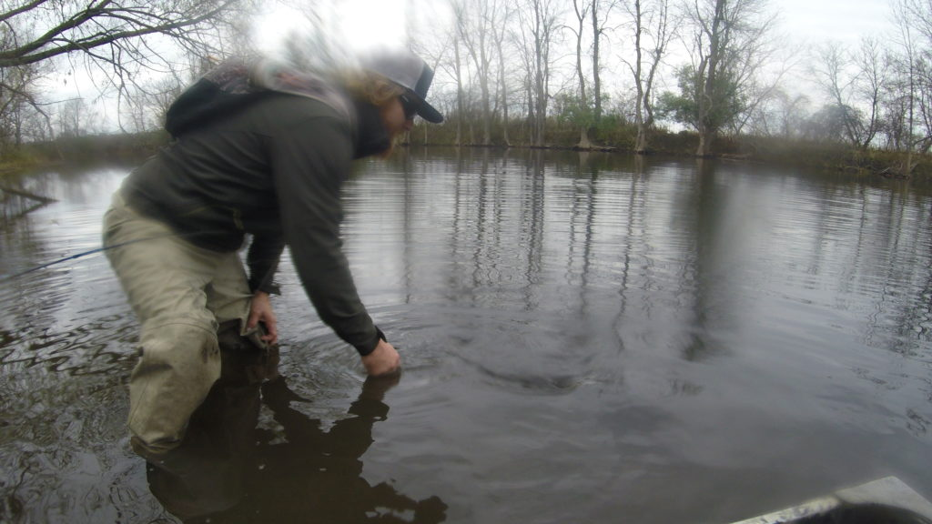 Fishing, Musky, Fly Fishing, Catch and release