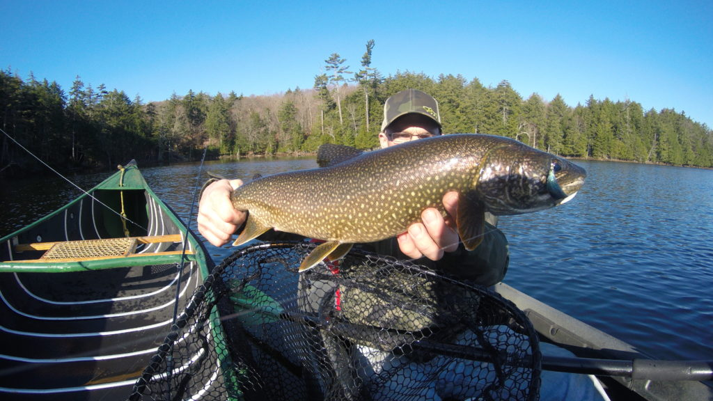 fish, trout, lake trout, fly fishing