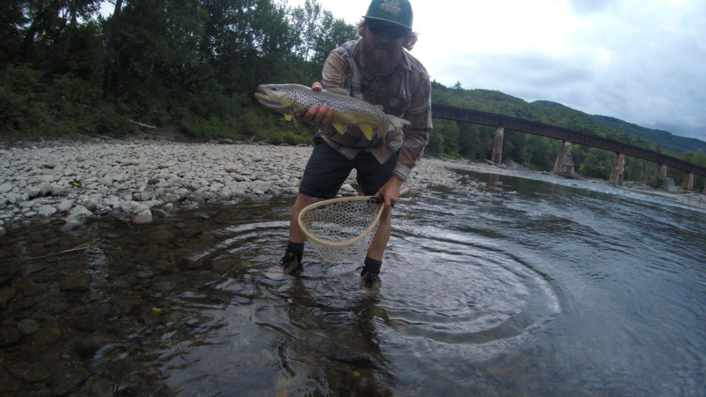 Fish, trout, brown trout, fly fishing