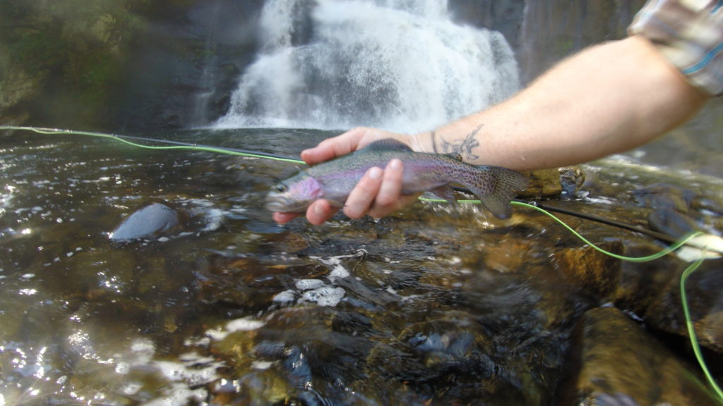 Fly Fishing, waterfall, Rainbow trout, River Drift,