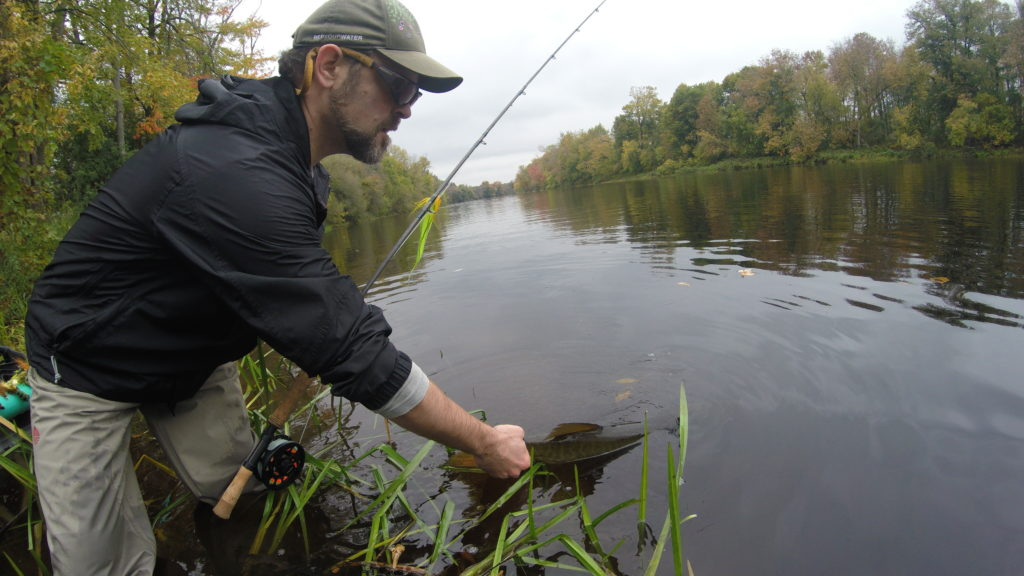 Fish, Muskie, Fly Fishing, Vermont, New York